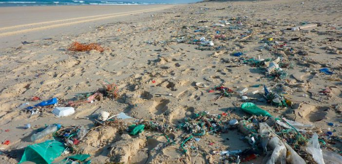 200 Kg d'escombraries recollits per la neteja de litoral a Formentera